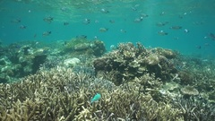 Thriving coral reef with fish south Pacific ocean Stock Footage