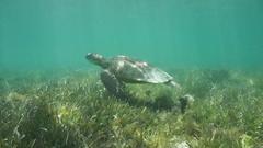 Underwater green sea turtle swimming Stock Footage