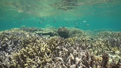 Underwater pristine coral reef in shallow water Stock Footage