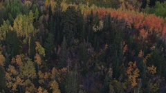 Aerial view flying over colorful forest at dusk Stock Footage