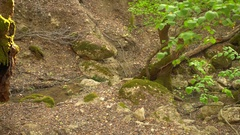 Valley of the butterflys (PETALOUDES, Rhodes) Stock Footage