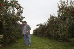 Man Checking Crop in Apple Orchard Kuvituskuvat