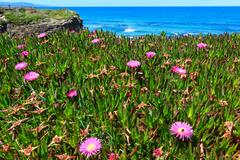 Atlantic blossoming coastline (Spain). Stock Photos