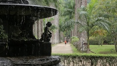 Jardim Botanico, Rio de Janeiro Stock Footage