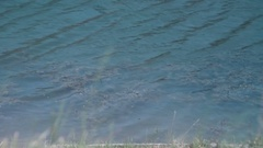 Ducks floating on the waves Stock Footage