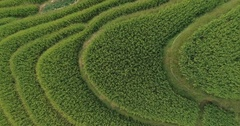 Famous attraction of Longsheng Rice Fields Stock Footage