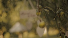 "A plate with a text ""All you need is love"" hanging on the apple tree. Stock Footage"