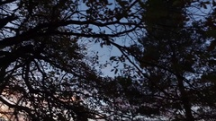 Dark forest canopy background. Stock Footage