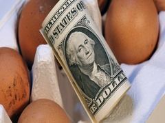 American dollar in a natural fresh eggs pack Stock Footage