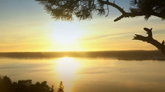 Scandinavian landscape. Lonely pine at sunset on a cliff. Dolly shot. Stock Footage