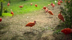 Exotic birds in the zoo Stock Footage