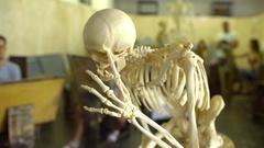 Skeleton, displayed in art school Stock Footage