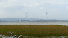 Xiangshan Wetlands of Hsinchu Stock Footage