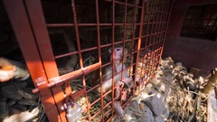 Sad monkey in a cage in hermit's cave. Pashupatinath Temple, Kathmandu Stock Footage
