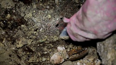 Archeology looking at a archaeological find Stock Footage