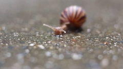 Snail on wet concrete after the rain. Stock Footage