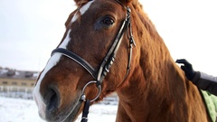 Cold winter day outdoor - hand pats red horse in stable, close up Stock Footage