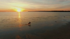 Girl Riding Horse on a Beach. Horse Walks on Water. Beautiful Sunset is Seen. Stock Footage