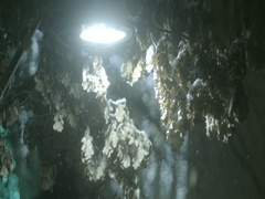 Night street lamp covered with branches and snow Stock Footage