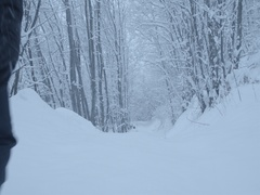 Mountaineer walk on snow-covered forest road in snowfall Stock Footage