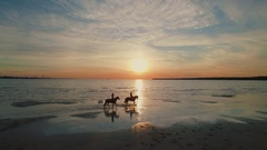 Two Girls are Riding Horses on a Beach. Horses Walk on Water. Beautiful Sunset. Stock Footage