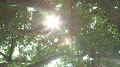4K Beautiful sunlight through the leaves of green trees at sunset in Taipei-Dan Stock Footage