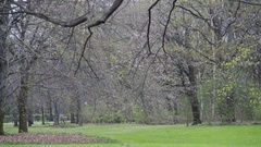 Green grass and trees in the park, Tiergarten, Berlin, Germany Stock Footage