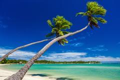 Palm trees hanging over stunning lagoon on Fiji Islands Stock Photos