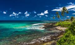 Tropical volcanic beach on Samoa Island with many palm trees Stock Photos