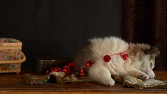 Little puppy lying and eating Christmas decoration bells on an old chest of Stock Footage