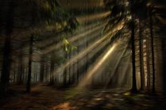 Sun rays in the forest Piirros