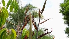 Hummingbird feeding by palm trees under blue sky 6 Stock Footage
