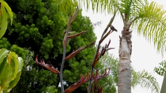 Hummingbird closeup by palm trees and flowers Stock Footage