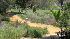 Family walks through nature park path on sunny day 2 Stock Footage