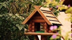 Birds going in and out birds house eating seeds Stock Footage
