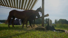 Horse is standing in the barn Stock Footage