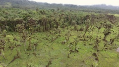 Descending to a waterlogged cattle pasture cut out of montane rainforest  Stock Footage