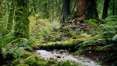 Moving Past River Deep In The Woods Stock Footage