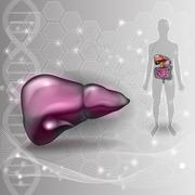 Liver anatomy scientific background and human silhouette with internal organs Stock Illustration