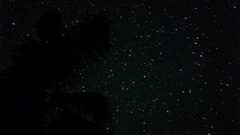 Time lapse of night star trail with palm tree Stock Footage