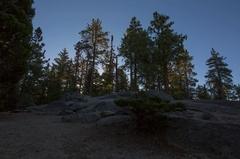 5K MoCo Timelapse Tracking Shot of Sunrise through Alpine Forest  Stock Footage