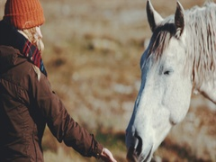 Woman hand feeding white horse and petting head Stock Footage