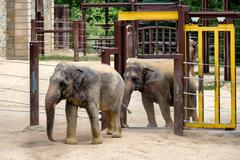 Elephants at the Smithsonian National Zoological Park in Washing Stock Photos