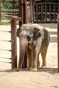 Elephant at the Smithsonian National Zoological Park in Washingt Stock Photos