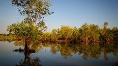 Time lapse of a mangrove ecosystem on the tidal flood Stock Footage