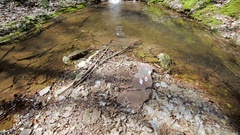 A small creek and waterfalls in autumn forest Stock Footage