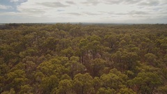 Australian Bush forest from the air Stock Footage