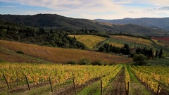 Chianti vineyard landscape in autumn, Tuscany, Italy Stock Footage