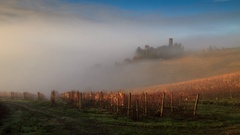 Wineyard with fog in autumn Stock Footage