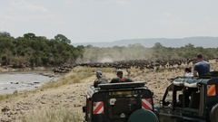Tourists in 4wd vehicles watch wildebeest massing at the mara river Stock Footage